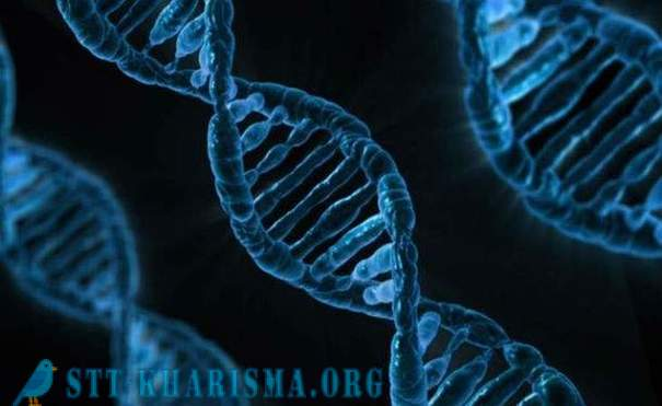 14 interesting facts about DNA