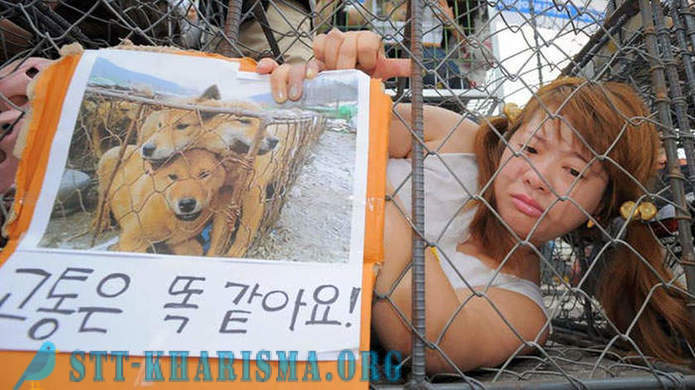 In South Korea closed the largest market of dog meat