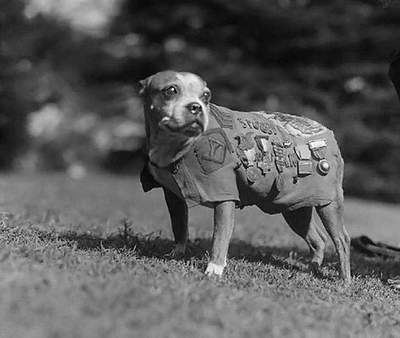 Sergeant Stubby - heroic dog of World War I.