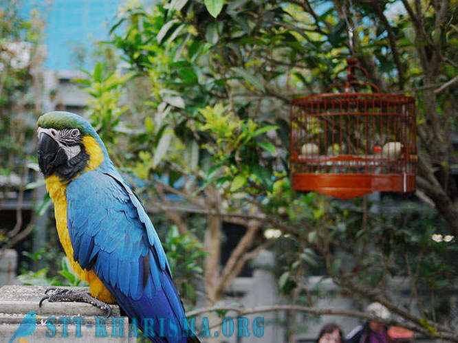 Travel to the paradise of birds in Hong Kong