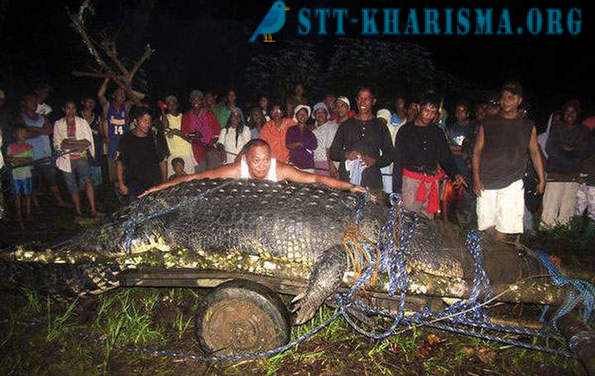 Filipinos caught crocodile weighing more than a ton