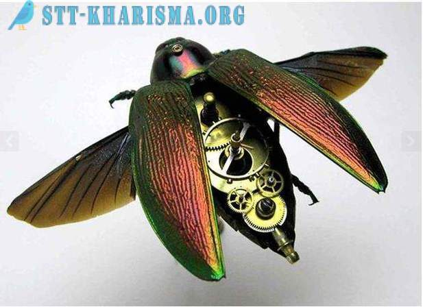 Amazing mechanical insects