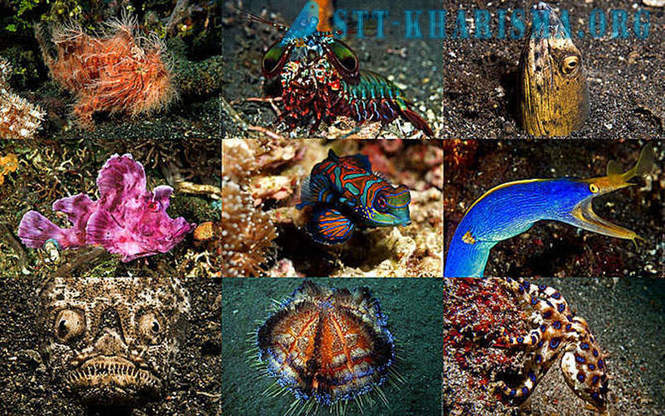 Underwater Zoo amazing creatures in Indonesia